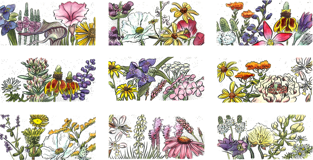Native Wildflowers of the Great Plains