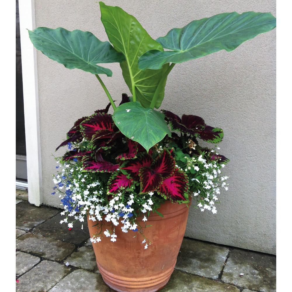 Summer-planters-2.jpg