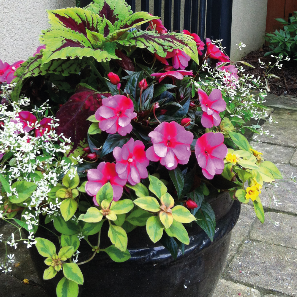 Summer-planters-4.jpg
