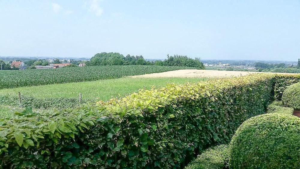 Hof Van Cleve's View