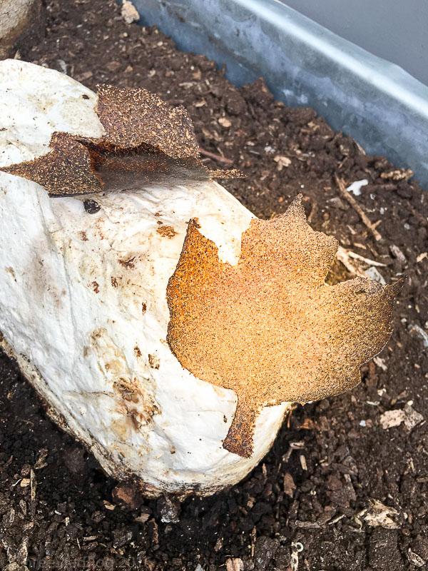 Mushroom Leaf, 8/10