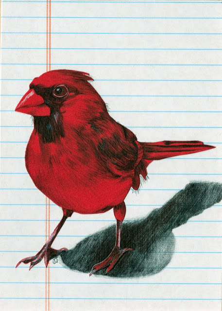 male-cardinal-mixed-media-illustration.jpg