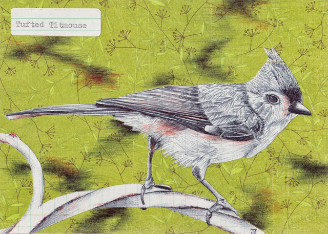 Tufted-Titmouse-illustration.jpg
