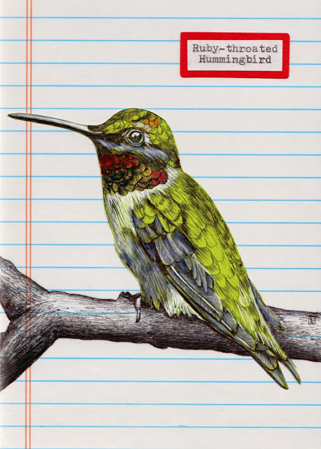 Ruby-throated%2BHummingbird%2Bmixed-media%2Billustration.jpg
