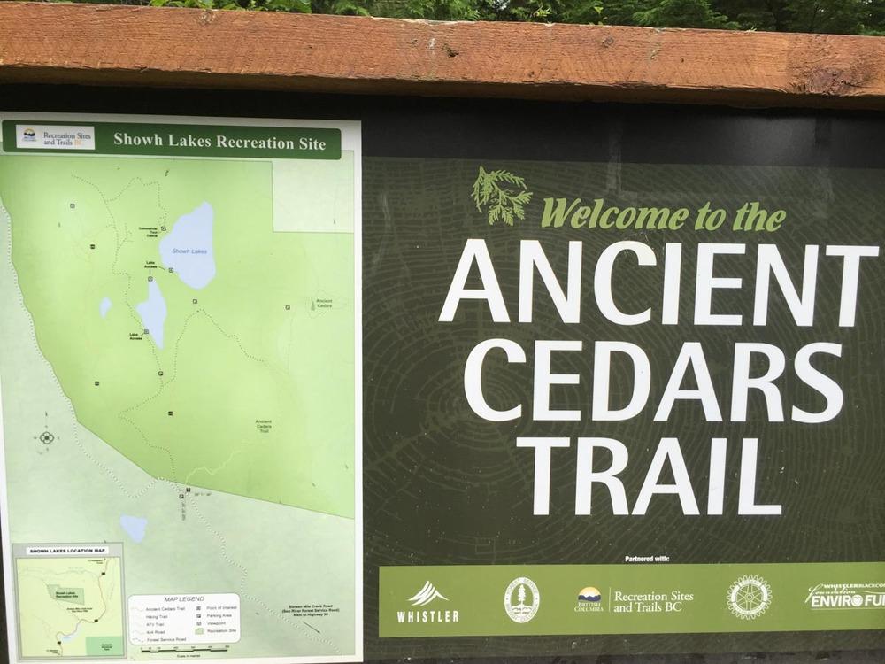 ancient-cedars-trail.jpg