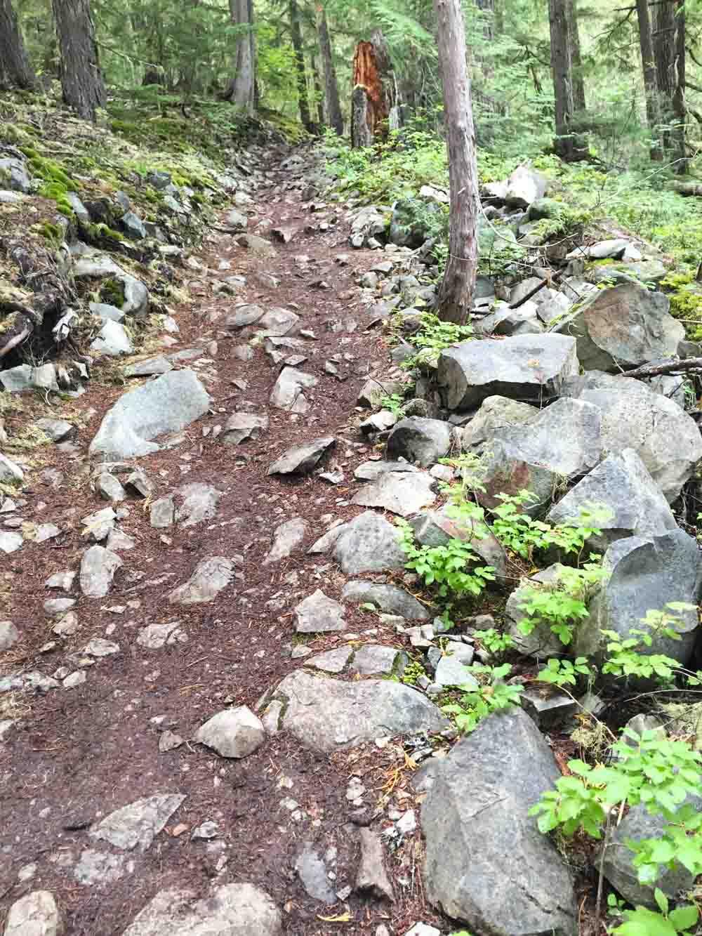ancient-cedars-trail4.jpg