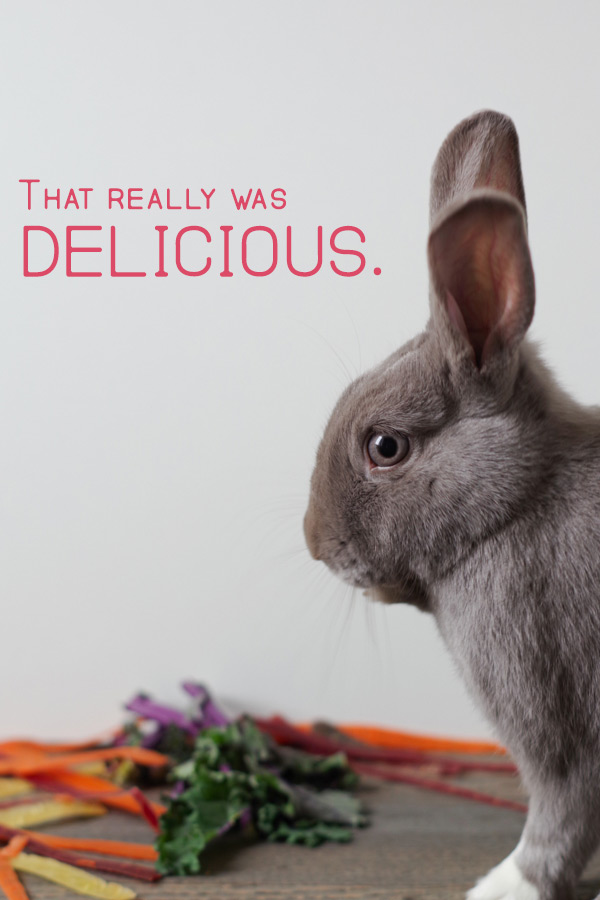 that-was-delicious-says-bunny