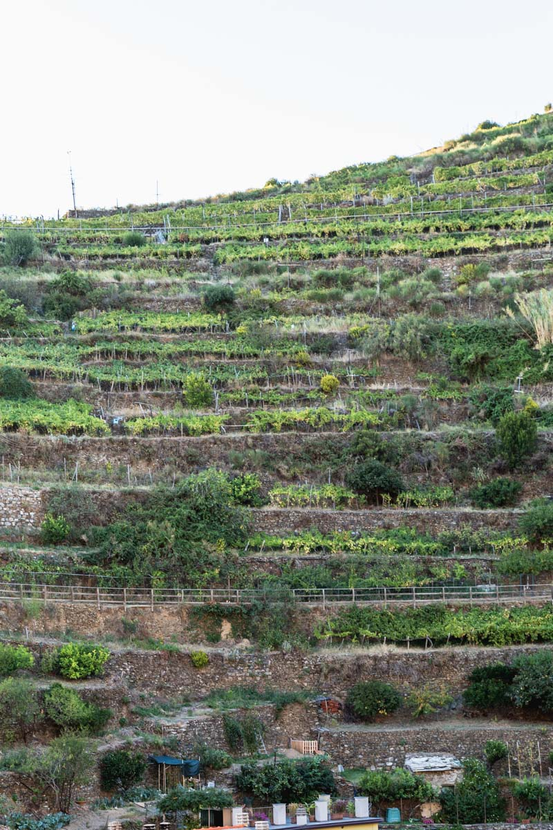 Tiered vineyards above Manarola, Cinque Terre, Italy. Photo by Kari | Beautiful Ingredient.