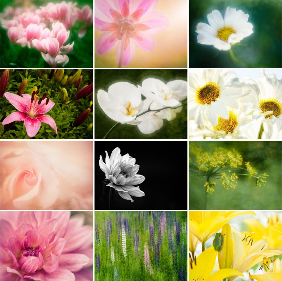 example of the 12 flower photographs in calendar
