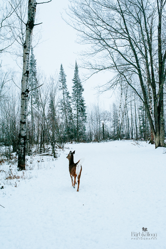 deer, hoyt lakes, minnesota