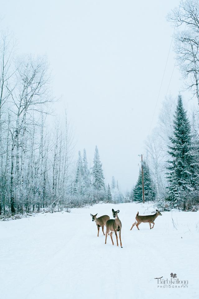 deer, hoyt lakes, minnesota