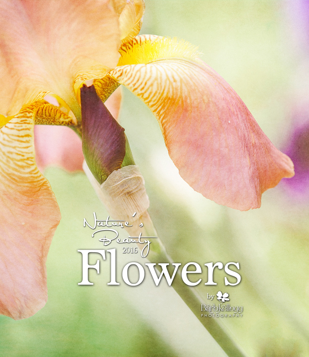 2016 Nature's Beauty calendar by Barb Kellogg