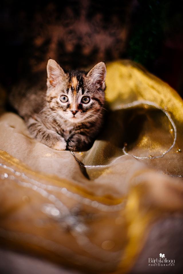 151220_DSC_2437_kitty_960px.jpg