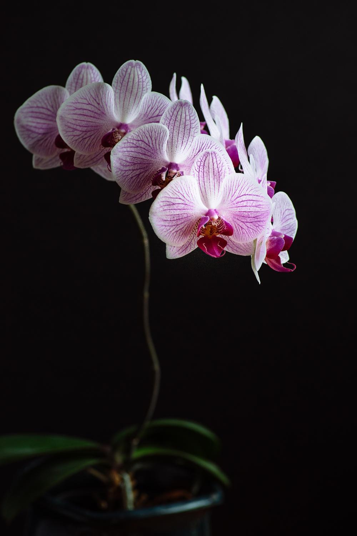 blooming-orchid-barb-kellogg.jpg