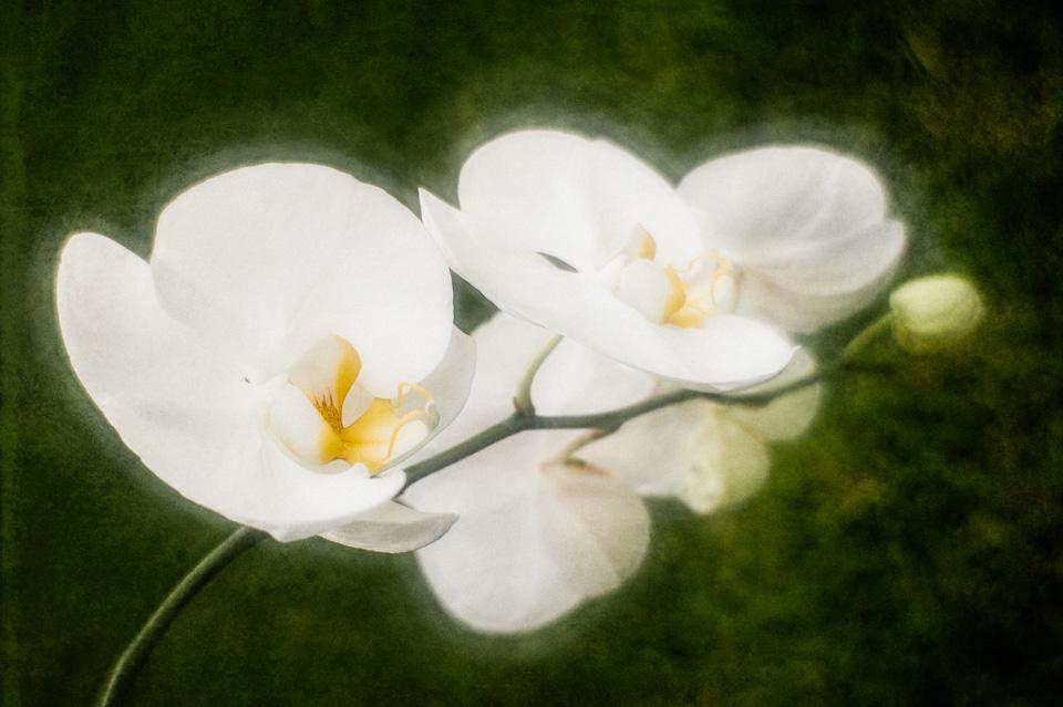 Summer-Orchid-barb-kellogg.jpg