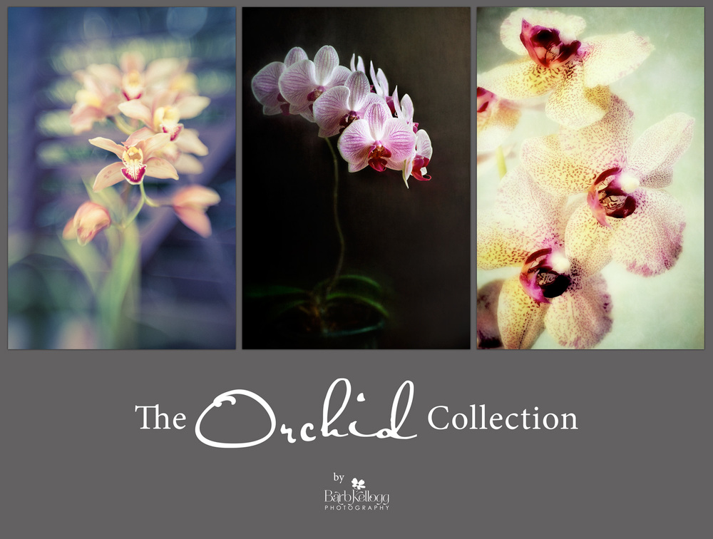 Orchid_Collection_1500px.jpg