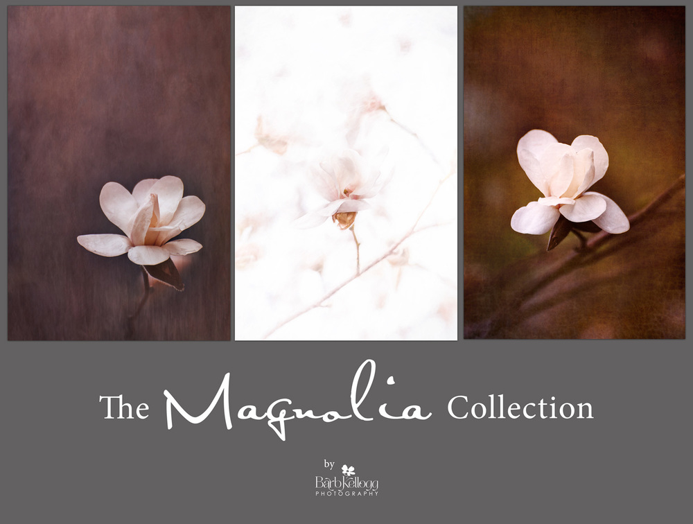 Magnolia_Collection_1500px.jpg