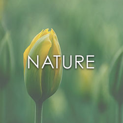 NATURE_250x250px.jpg