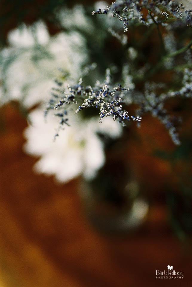 160815_0380_28_portra800_daisies_960px.jpg