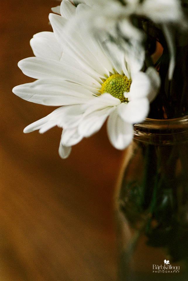 160815_0380_31_portra800_daisies_960px.jpg