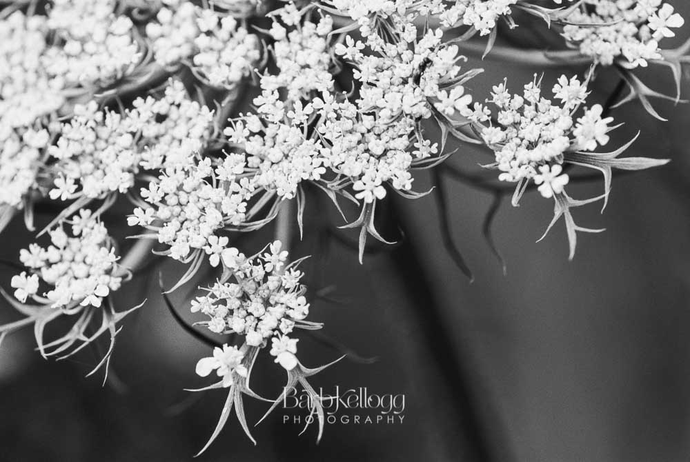 Lovely Lace, b&w film photography