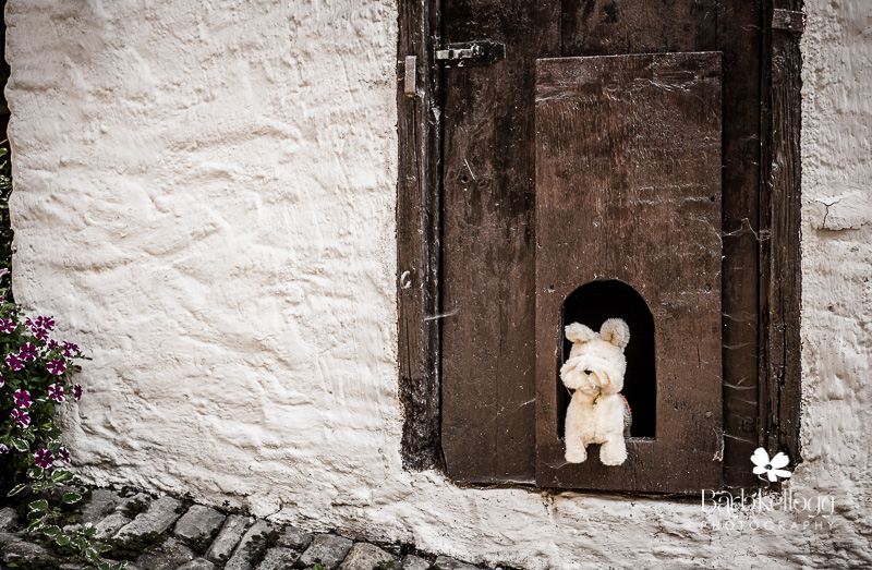 Little stuffed dog