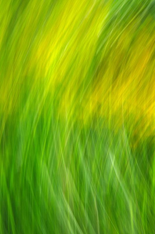 Monet I