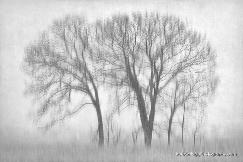 black & white image of trees in the fog