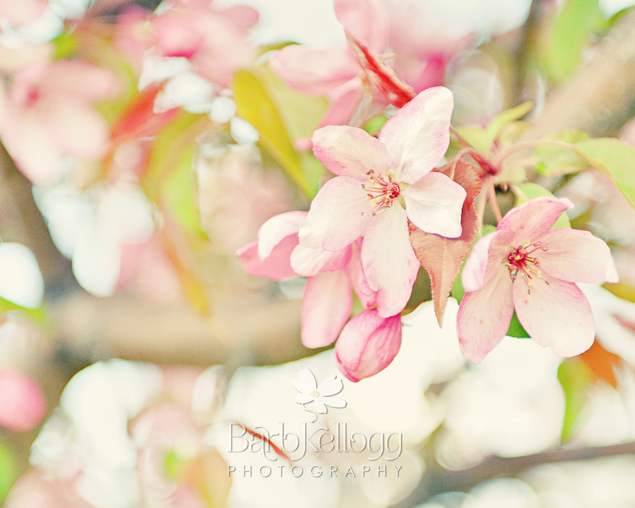 flowers on trees