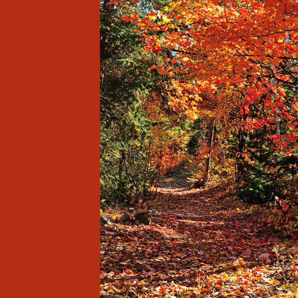 fallen leaves in Autumn on a path