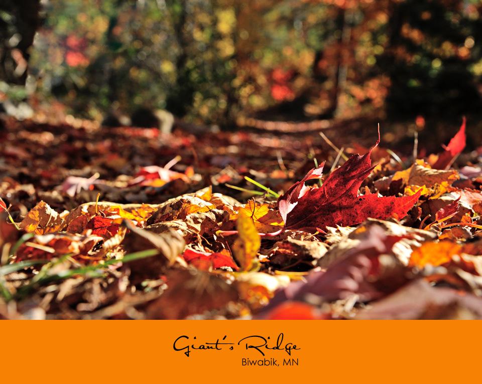 fallen leaves in the sunlight