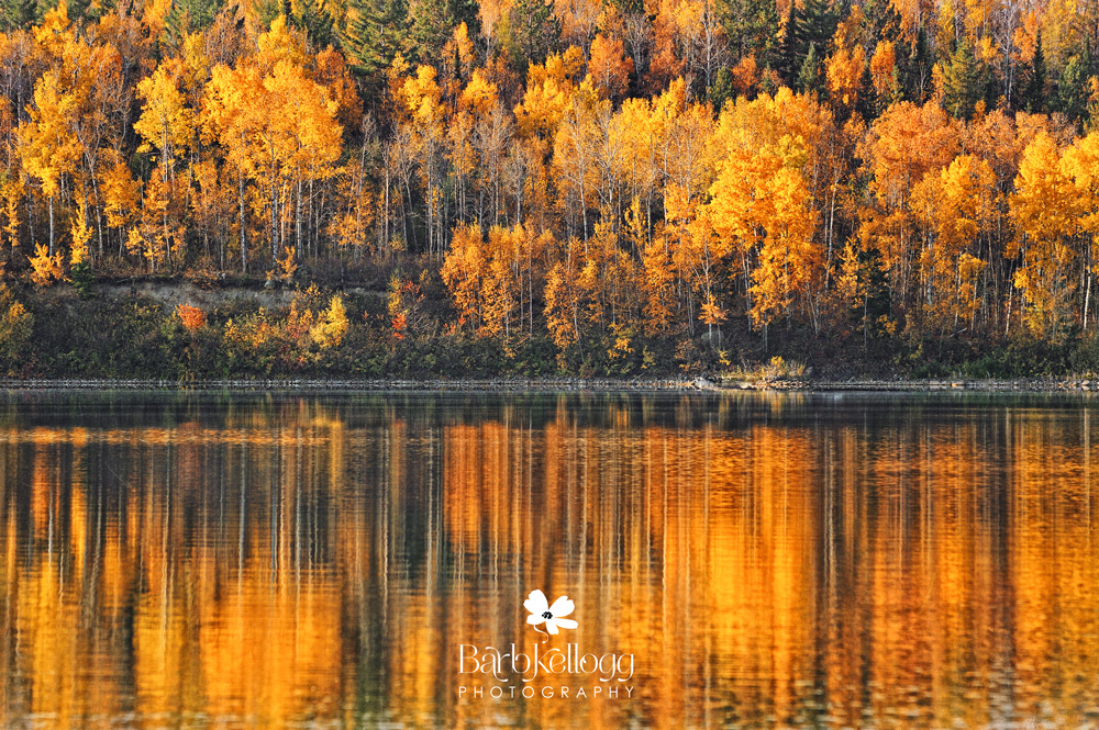 fall trees reflected in lake