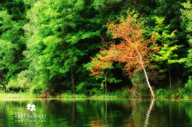 lake near St John's with trees