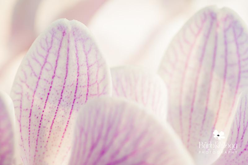 dsc_6340_orchid.jpg