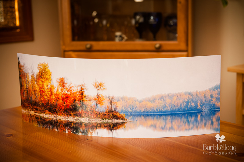"""24x8"""" Curved Metal Print, """"Last Green is Gold"""" photograph is shown"""