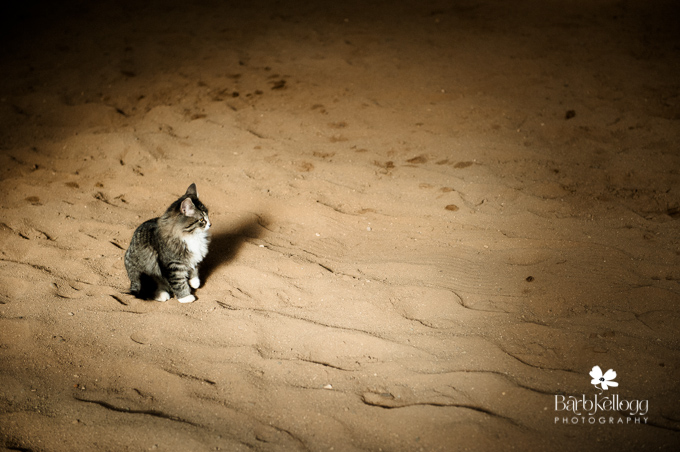 barn cat in the dirt