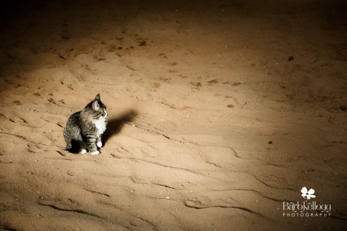 131118_dsc_1158_barn_cat.jpg