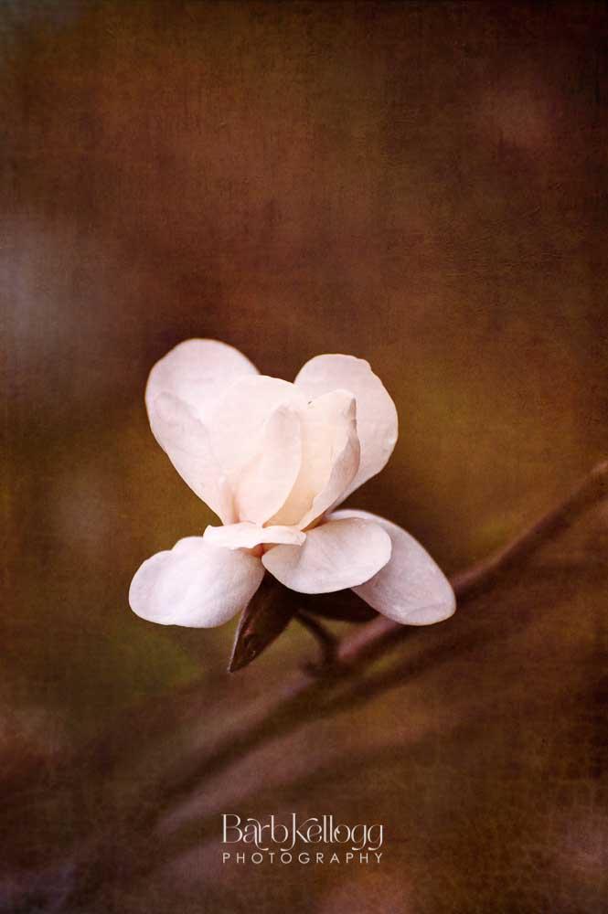 Calm Magnolia