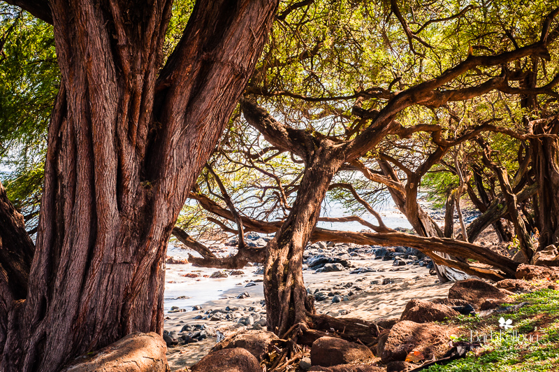 Secluded Beach , photographed in Maui, Hawaii, © Barb Kellogg
