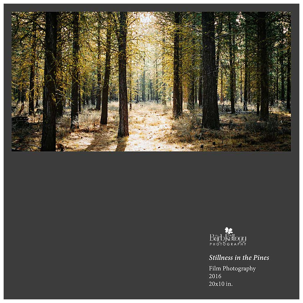 Stillness-in-the-Pines_1000px_collage.jpg