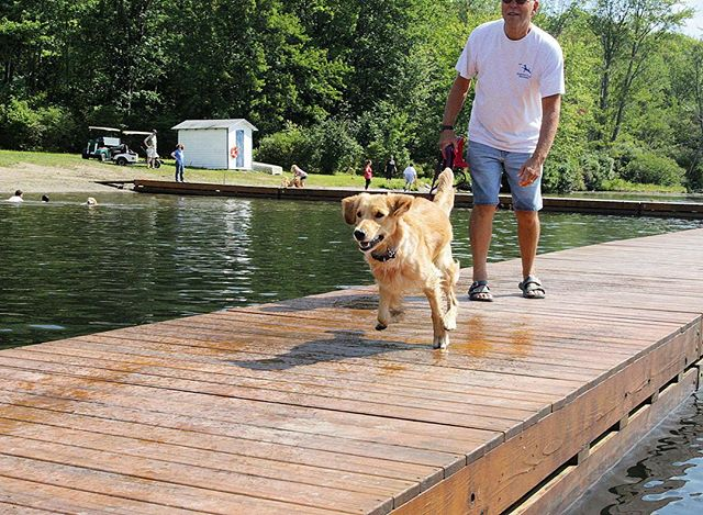 A dock diver in action.  #dogcamp #documentary #film #athlete #swim #jump #run #goldenretriever #dog #puppy #dogslife #golden #summer #lake #woof #model #barkhappy