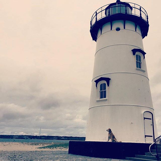 Dog Camp's furiend Sasha keeping watch!  Photo Credit: Fonda Feingold @feintunes  #dogsofinstagram #goldenretriever #dogcamp #film #dogs #puppy #watchdog #bark #lighthouse #dogstagram #goldens