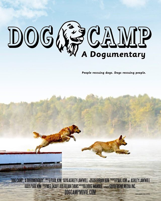 And we've got movie posters!  Big thanks to Steve O'Byrne for the awesome photo and Kelly Convery for the amazing design!  #dogcamp #documentary #film #movie #movieposter #dogs #puppies #goldens #goldenretriever #rescue #rescuedog #summer #model #athlete #dogstagram #dogsofinstagram #woof #bark