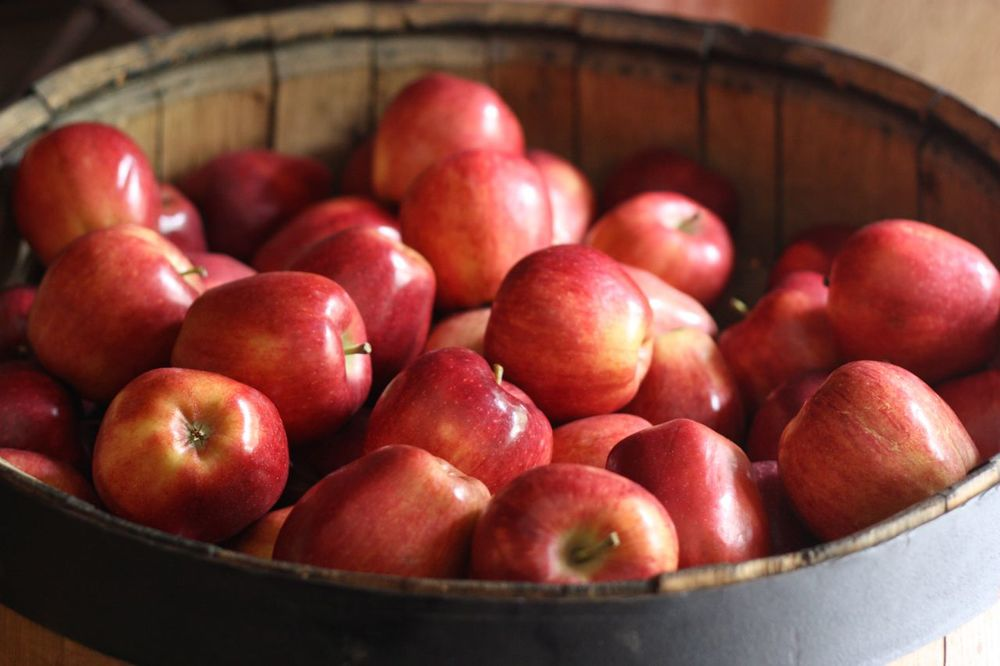 barrel of apples.jpg