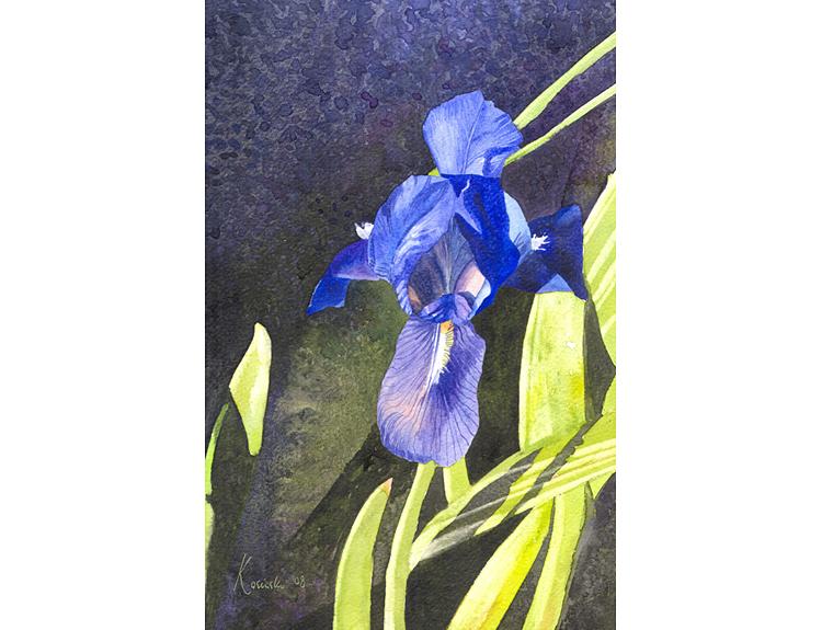 Blue Iris - (Sold)