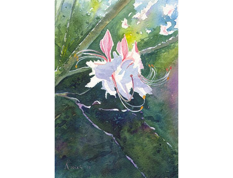 Wild Azalea - (Sold)