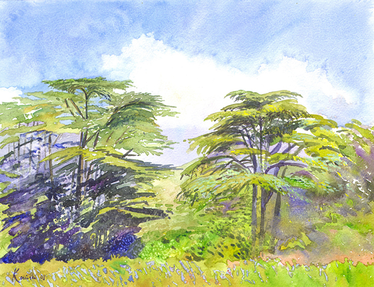Cedars of Lebanon (Sold)