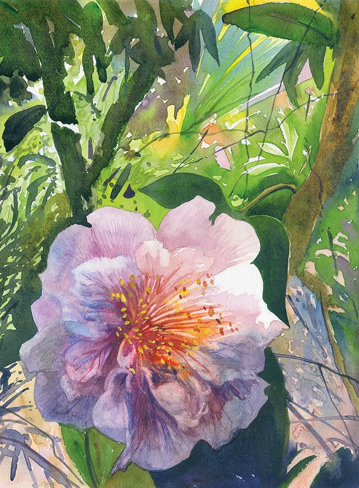 Camellia, Brookgreen Gardens, SC