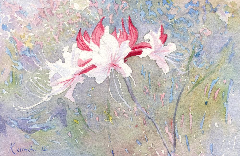 120216-kosinski-azaleas-brookgreen-gardens-sc.jpg