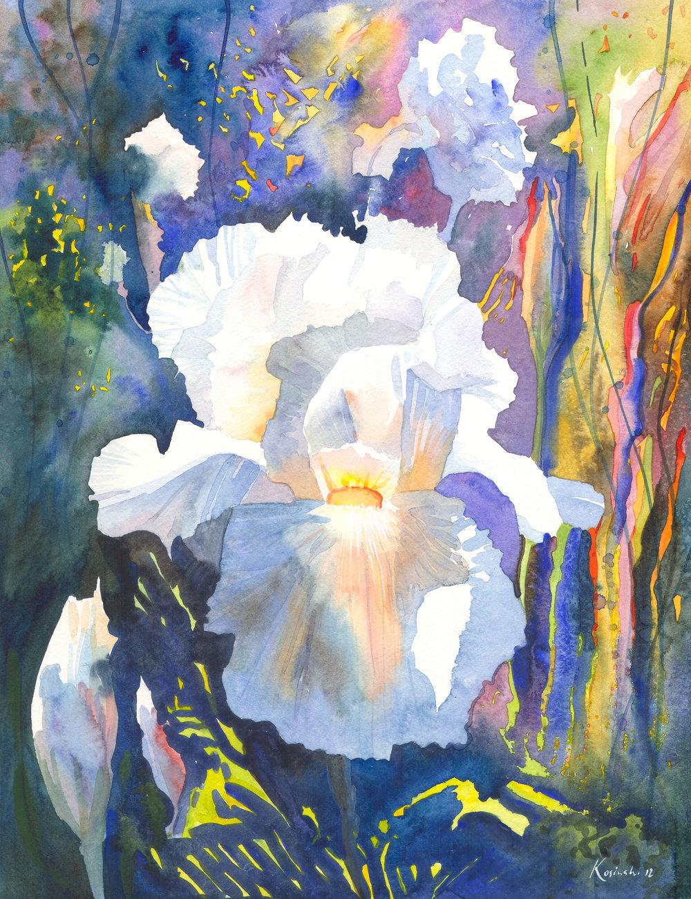White Iris, Brookgreen Gardens, SC